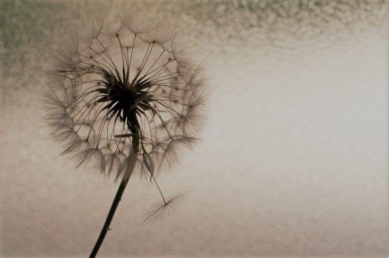 La forza della fragilità